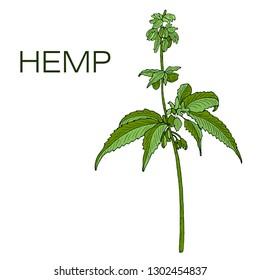 Vector color green of hand drawn hemp cannabis.