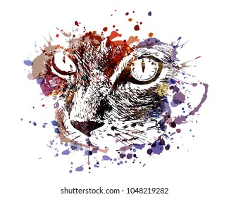 Vector color illustration of cat face