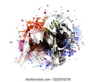 Vector color illustration elephant