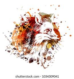 Vector color illustration fox head