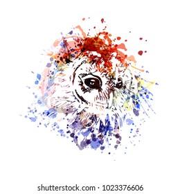 Vector color illustration head owl