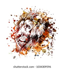 Vector color illustration lion head