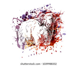 Vector color illustration of a ram