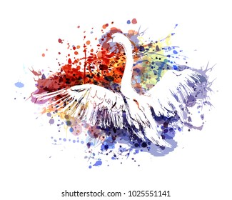 Vector color illustration swan