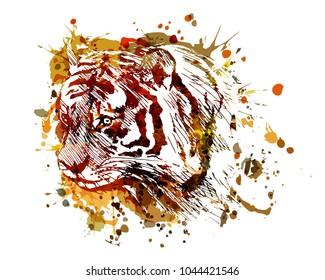 Vector color illustration tiger head