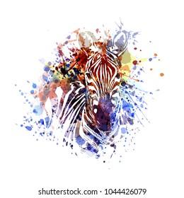 Vector color illustration of zebra