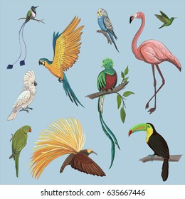 Vector color set of beautiful exotic birds of the Amazon rainforest