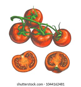 Vector color set of fresh vegetables sketches isolated on white. Hand drawn botanical illustration of red tomatoes on vine and slices in engraving style. Top view