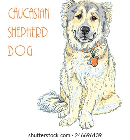 Vector color sketch Caucasian Shepherd Dog breed sitting and smiling