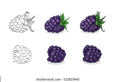 Vector, color and sketch, tasty blackberry