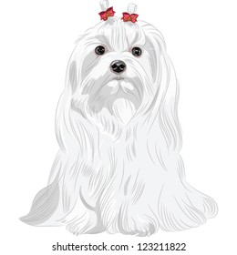 Vector color sketch white serious dog Maltese breed with red bows sitting