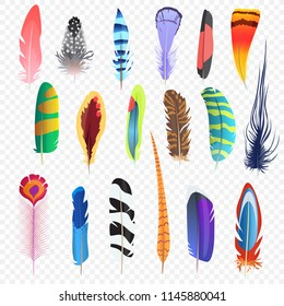 Vector colored bird feathers isolated on the alpha transperant background. Stylized feathers set.