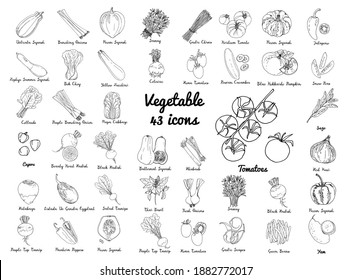 Vector colored food icons Vegetables. Farm products, beets, radishes, turnips, herbs and spices, salad, pumpkin, tomatoes, peppers