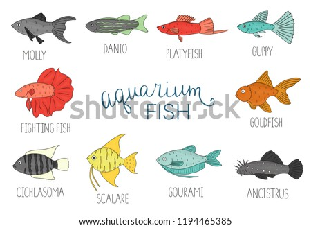 Vector Colored Set Aquarium Fish Isolated Stock Vector Royalty Free