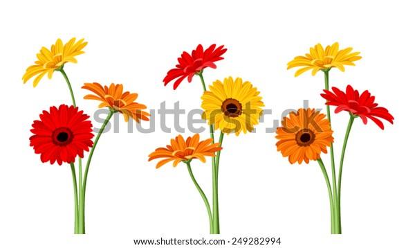 Векторные красочные гербер цветы со стеблями изолированы на белом фоне.
