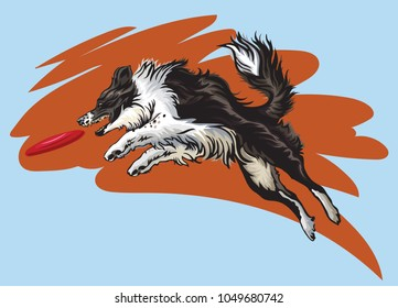 Vector colorful illustration with dog (border collie) isolated on blue and red background. Fluffy black and white dog in profile view jumping and catching red plastic disc
