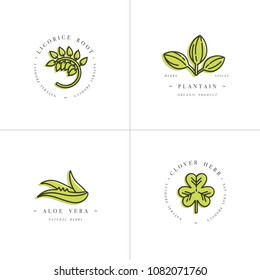 Vector colorful set design templates and emblems - healthy herbs and spices. Different medicinal, cosmetic plants- licorice, aloe vera, plantain, clover. Logos in trendy linear style