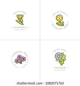 Vector colorful set design templates and emblems - healthy herbs and spices. Different medicinal, cosmetic plants- calendula, dandelion,valeriana and feverfew. Logos in trendy linear style