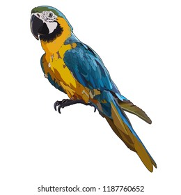 Vector colorful tropical parrot. Vector isolated elements on the white background.