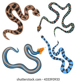 Vector colorful tropical snakes collection. Exotic poisonous snakes set top view.