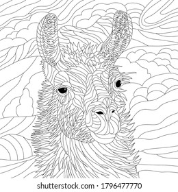 Vector coloring illustration with  lama portrait. Wildlife animal image. Drawing lama face. Black illustration.Colouring page. Mountainprint. Monochrome line drawing