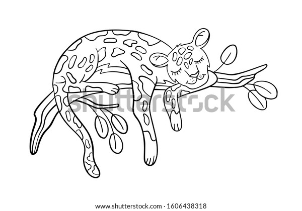 Vector Coloring Page Cute Leopard Sleeping Stock Vector (Royalty Free)  1606438318