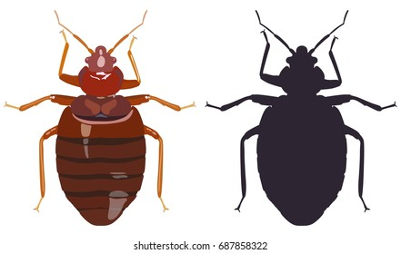 Vector colorVector color image of a bug bedbug and its silhouette on a white background. image of a bug bedbug and its silhouette on a white background.