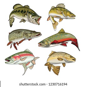 Vector colour illustration of 6 sport fishing fish