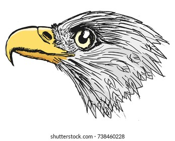 vector, coloured, sketch, hand drawn image of bald eagle