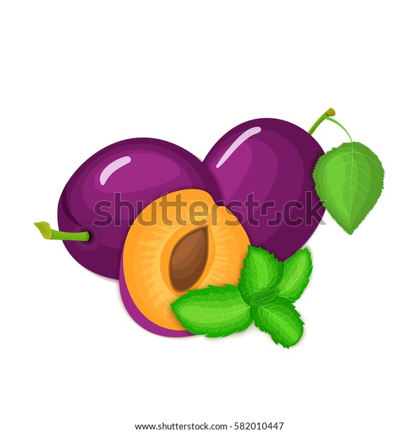 Vector composition of a few plums and mint leaves. Ripe plum fruits appetizing looking. Group of tasty ripe plum with fresh pepper mint leaf packaging design of juice, breakfast, healthy vegan food.