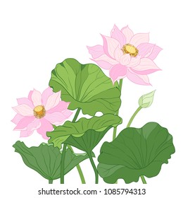 Vector composition  with flowers, leaves and bud of lotus on a white background. Hand-drawn  illustration.