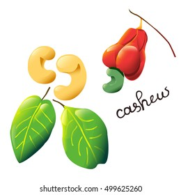 Vector composition with an isolated cashew nut, cashew fruit and leaves. Perfect cartoon design for cooking oil label, recipe, logo, chocolate cover, ice cream cover, biology book or poster