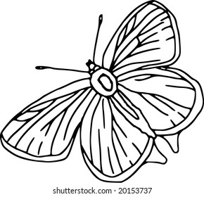 vector - contour butterfly  isolated on white background