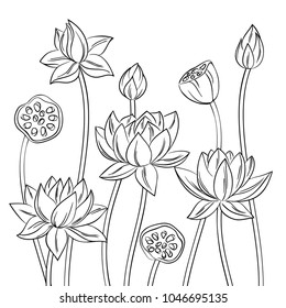 vector contour lotus lily flowers with bud  on white, coloring book of simple meditation natural  symbol