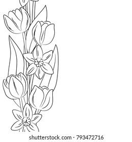 vector contour tulip narcissus vertical border