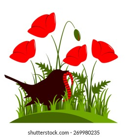 vector corn poppy and bird with worm isolated on white background
