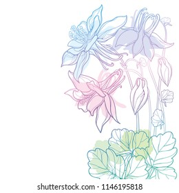Vector corner bouquet with outline Aquilegia or Columbine flower, bud and leaf in pastel blue and pink isolated on white background. Composition with contour ornate Aquilegia for summer design.