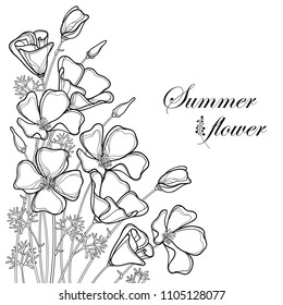 Vector corner bouquet of outline California poppy flower or California sunlight or Eschscholzia, leaf and bud in black isolated on white background. Contour poppy for summer design or coloring book.