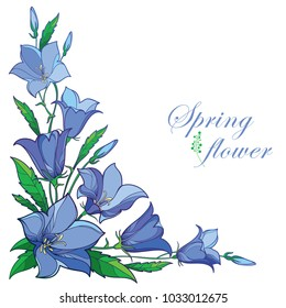 Vector corner bouquet with outline Campanula or Bellflower or Bluebell flower in pastel blue, leaf and bud isolated on white background. Ornate plant in contour style for greeting summer design.