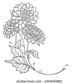 Vector corner bouquet with outline Dahlia or Dalia flower and leaf in black isolated on white background. Bunch of contour ornamental garden plant Dahlia for autumn design or coloring book.
