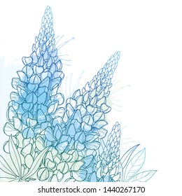 Vector corner bouquet of outline Lupin or Lupine or Texas Bluebonnet flower bunch, bud and ornate leaf in pastel blue isolated on white background. Contour decorative plant Lupin for summer decor.
