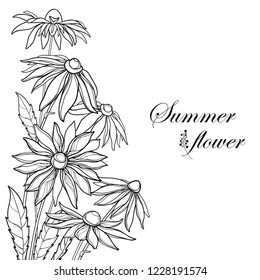 Vector corner bouquet with outline Rudbeckia hirta or black-eyed Susan flower, ornate leaf and bud in black isolated on white background. Contour Rudbeckia bunch for summer design and coloring book.