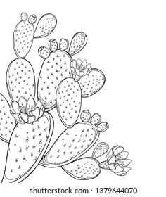 Vector corner bunch of outline Indian fig Opuntia or prickly pear cactus, flower, fruit and spiny stem in black isolated on white background. Ornate contour Opuntia segments for summer coloring book.
