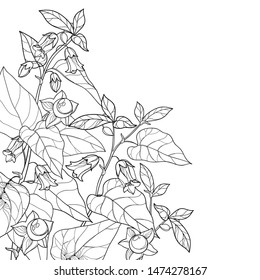 Vector corner bunch of outline toxic Atropa belladonna or deadly nightshade flower, bud, berry and leaf in black isolated on white background. Poisonous contour Belladonna plant for coloring book.