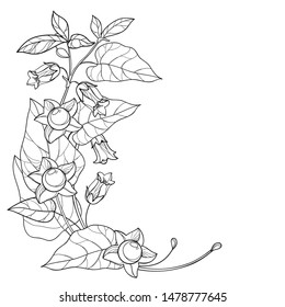 Vector corner bunch with outline toxic Atropa belladonna or deadly nightshade flower, bud, berry and leaf in black isolated on white background. Poisonous contour Belladonna plant for coloring book.
