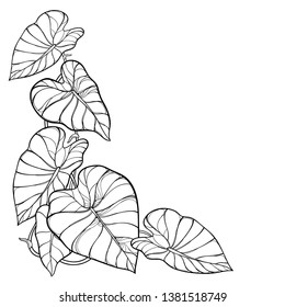 Vector corner bunch of outline tropical leaf Colocasia esculenta or Elephant ear or Taro plant in black isolated on white background. Ornate contour Colocasia foliage for summer coloring book.