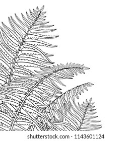 Vector corner composition of outline fossil forest plant Fern with fronds in black isolated on white background. Drawing of contour Fern with ornate leaf for summer design or floral coloring book.