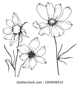 Vector Cosmos floral botanical flowers. Wild spring leaf wildflower isolated. Black and white engraved ink art. Isolated cosmea illustration element.