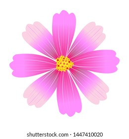 vector cosmos flower in park and outdoor , this flower love sun light , colorful , happy and fresh