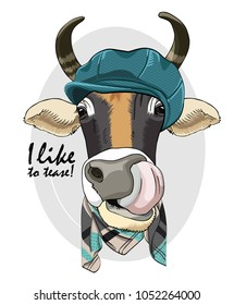 Vector cow with blue cap and scarf. Hand drawn illustration of dressed cow.